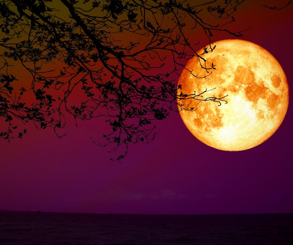 Beltane – das leidenschaftliche Hexenfest im Jahreskreis
