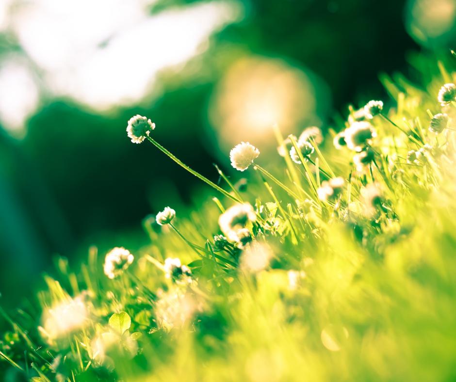 Ostara – Frühlings-Tag-Nachtgleiche